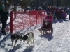 dogsled-2-dog-jr-01