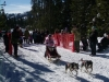 dogsled-2-dog-jr-02