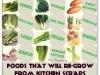 foods-that-regrow