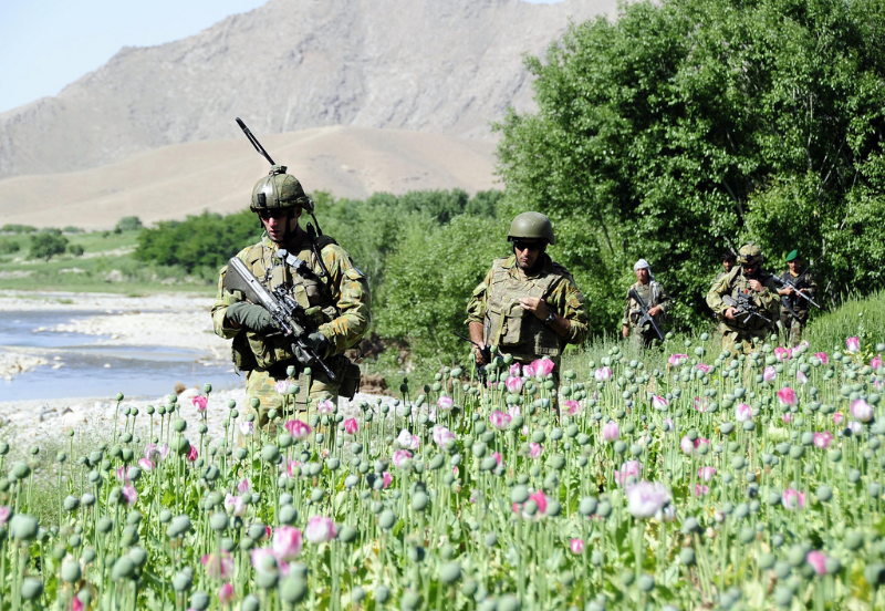 USA Army guarding Afghan poppy fields
