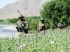 USA Army guarding Afghan poppy fields