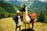 llama packing