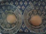 factory VS range egg