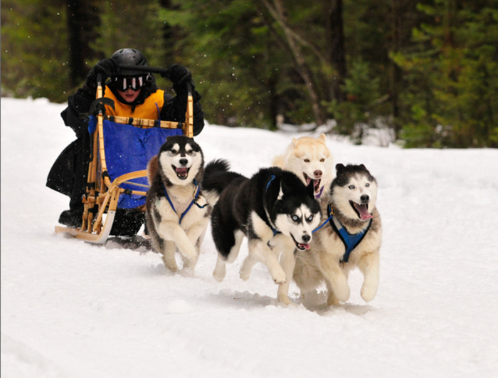 dogsled 4 dog