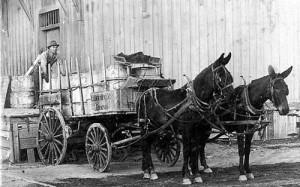 mule-drawn wagon