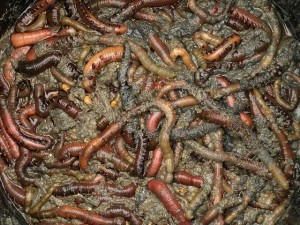 bucket of worms