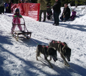 dogsled-2-dog-jr-03