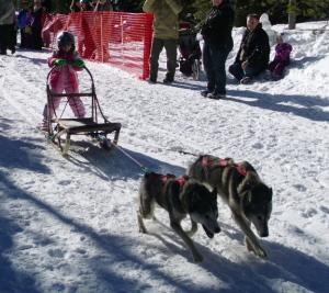 dogsled-2-dog-jr-03