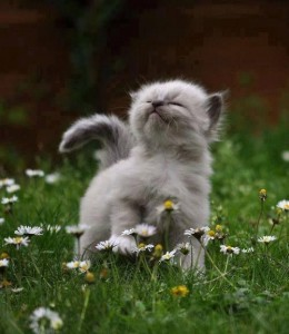prancing in the daisies