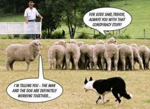 trevor the sheep conspiracy theory