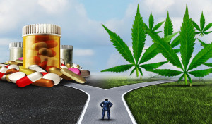 marijuana-saves